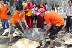 Melepas satwa (Fangsheng) Penyu di Pantai Tuban