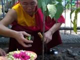 Proses penyiraman pada pohon Bodhi